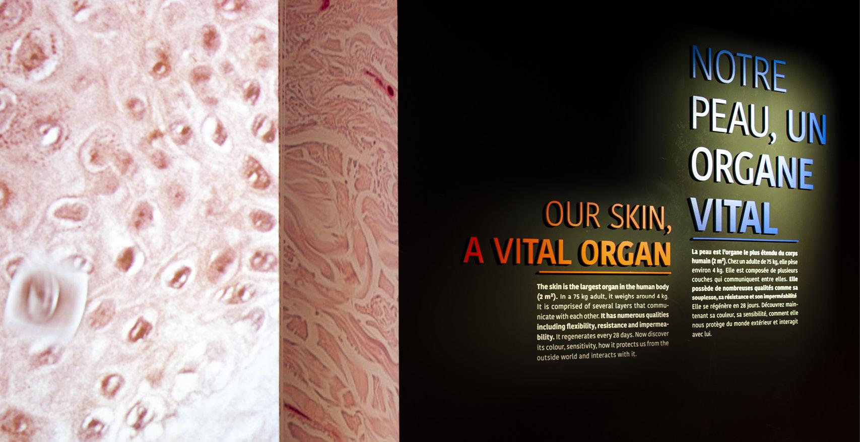 La fabrique créative conception et réalisation de l'exposition Dans ma peau au Musée de l'Homme pour L'Oréal
